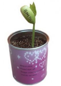 Producent magicznych roślinek